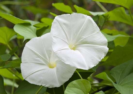 10 Beautiful Night Blooming Flowers Bob Vila,Baby Closet Organizers Ideas