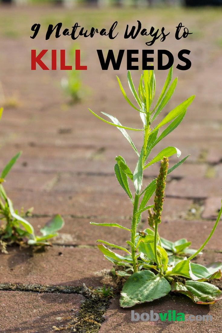 Natural Weed Killer 9 Ways To A No Weeds Garden Bob Vila