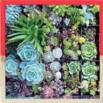 green gift guide vertical planter