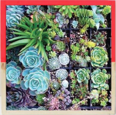 Shelterblack gardenstateboxplanter ecofriendygiftguide