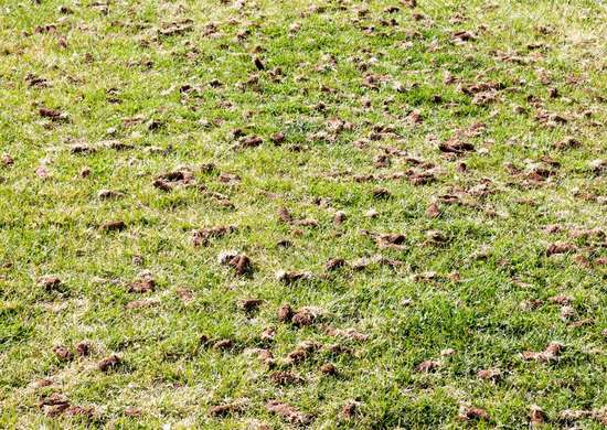 Aerate Lawn DIY