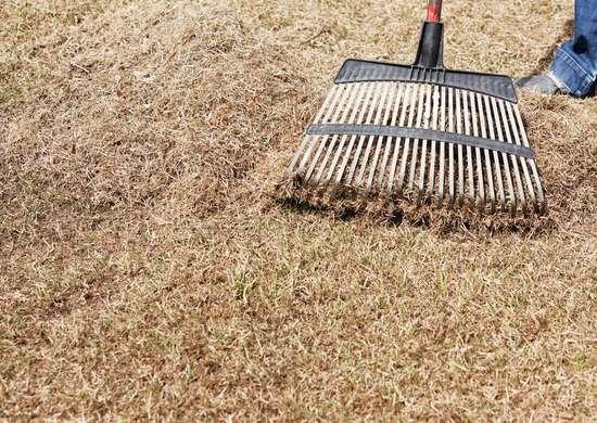 Dethatch Lawn With Rake