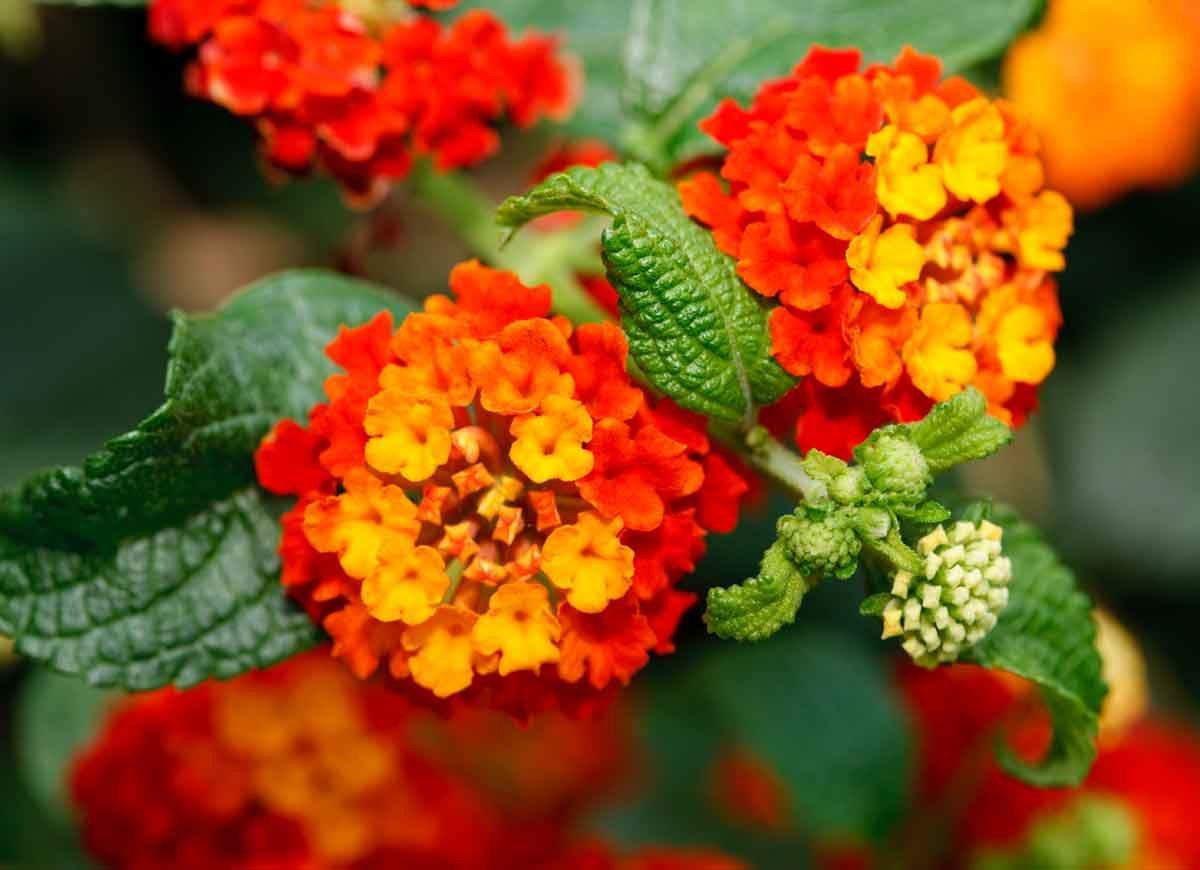 14 Best Heat Tolerant Plants Bob Vila