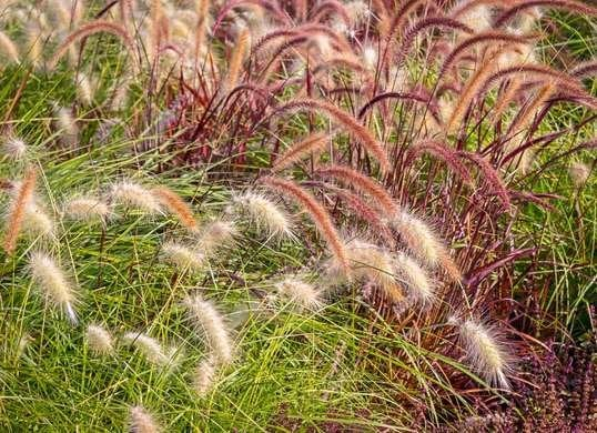 Ornamental Grass in Backyard
