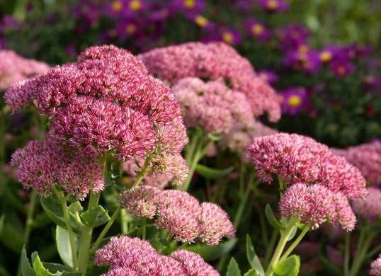 Border Plants Perfect For Lining Your Driveway Or Walkway 12