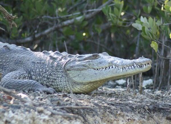 Croc Commune