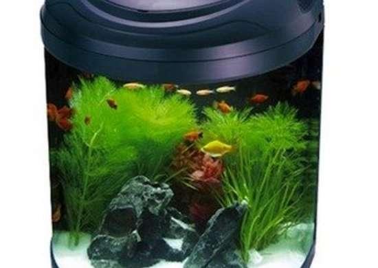 Aquarium halfmoonbiotope drsfostersandsmith