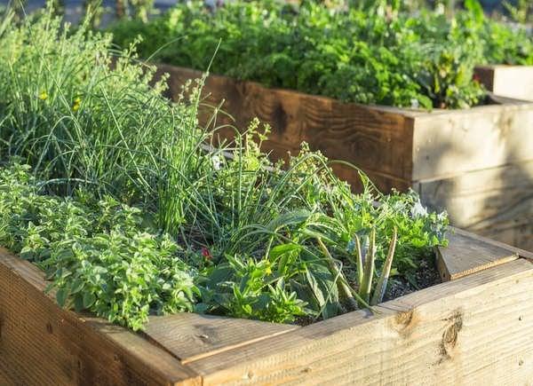 Vegetable Garden On Slope