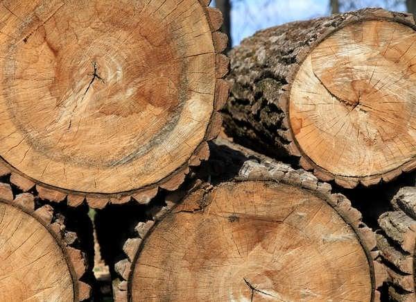 Cedar Wood Cicles Art Projects