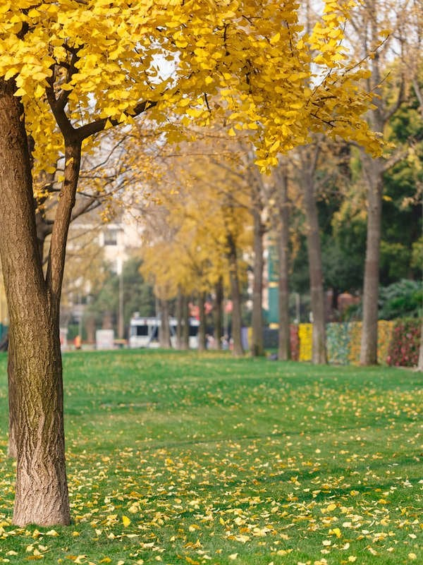 The Best Trees For Fall Color Bob Vila