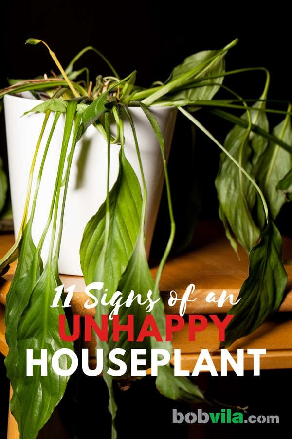 Houseplant Problems - 11 Signs of an Unhappy Indoor Plant