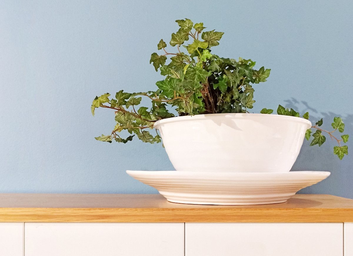 The 9 Best Houseplants for the Kitchen