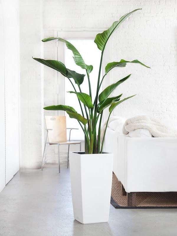 10 Large Houseplants That Make A