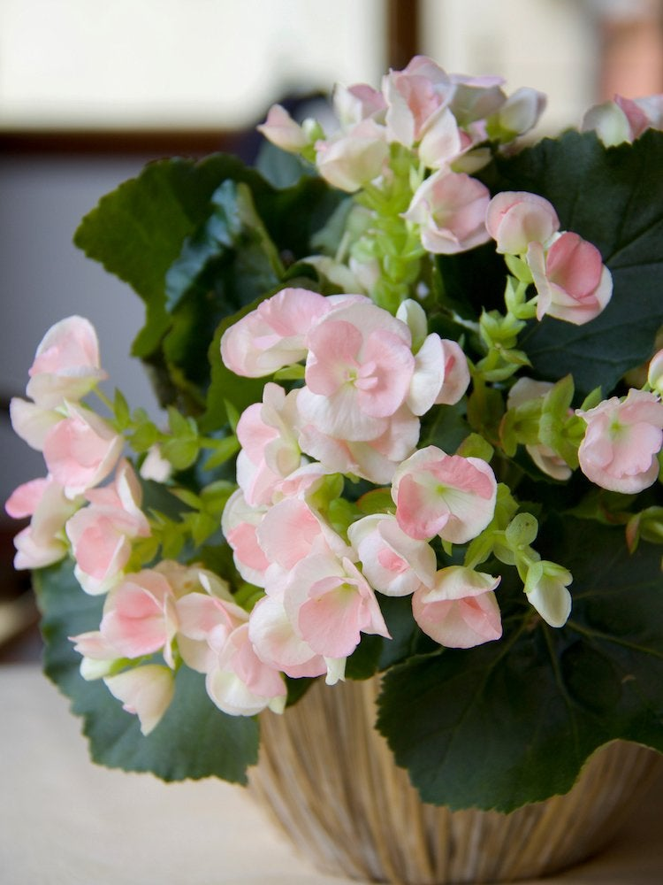 20 Flowering Houseplants That Will Add Beauty to Your Home - Bob Vila