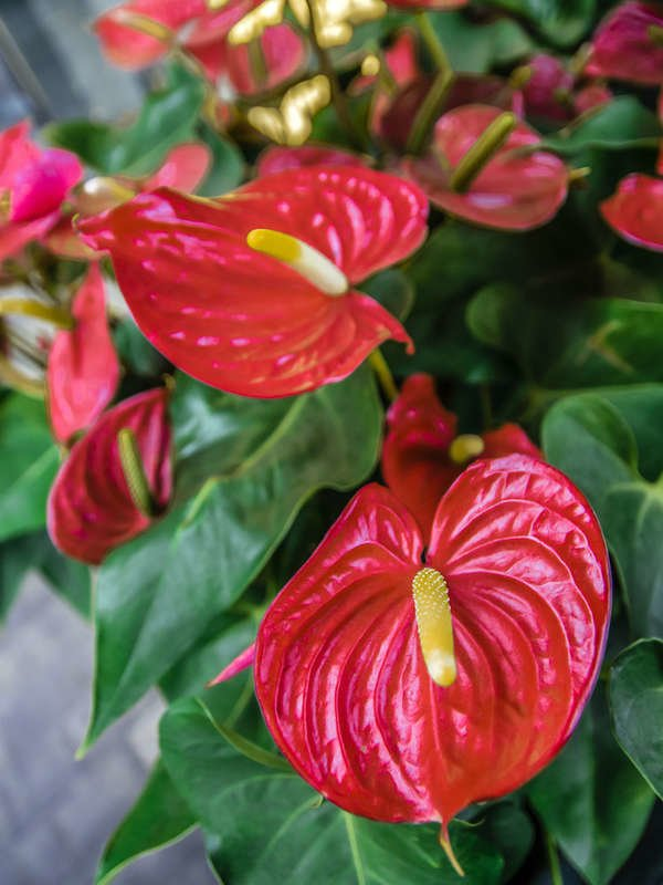 20 Flowering Houseplants That Will Add