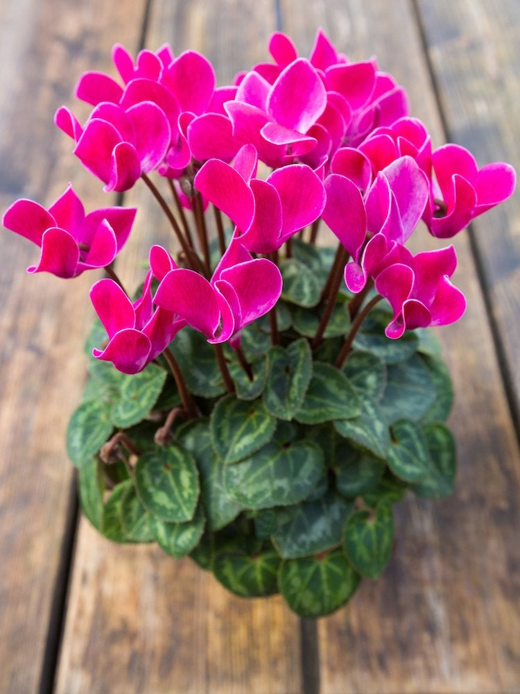 20 Flowering Houseplants That Will Add Beauty To Your Home Bob Vila,What A Beautiful Name Piano Sheet Music Easy