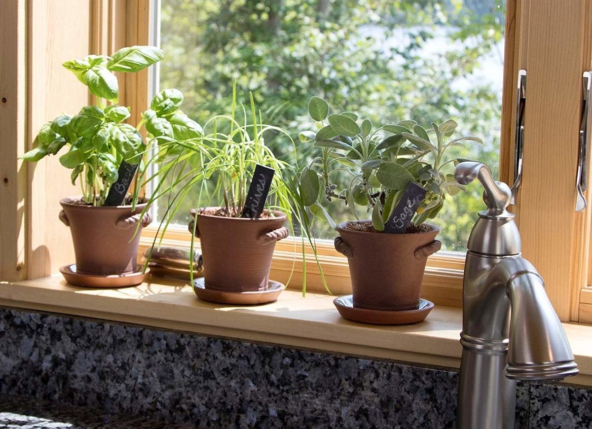 The 7 Easiest Ways to Grow Herbs