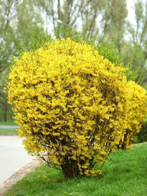 50 Plants That Thrive In Any Yard Bob Vila