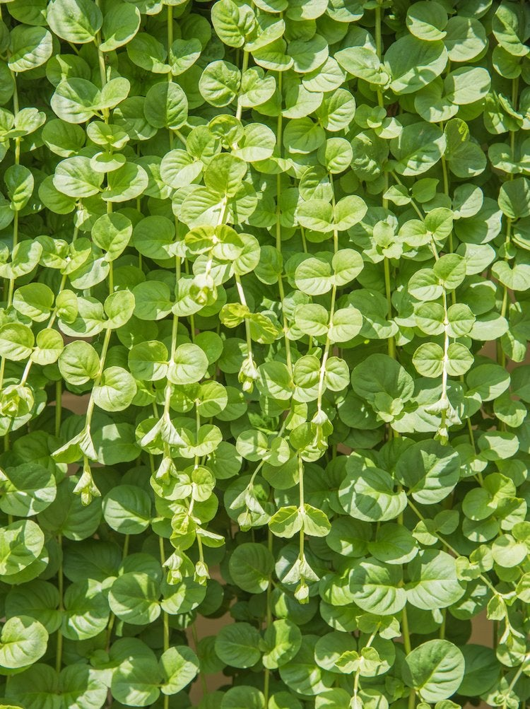 50 Plants That Thrive in Any Yard