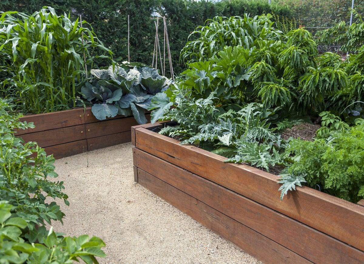 Picture of: Planning A Raised Bed Follow These 10 Tips Bob Vila Bob Vila