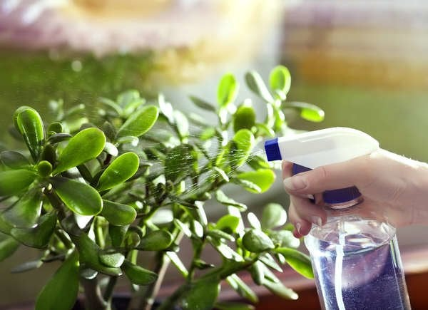 Overwatering plants causes mold