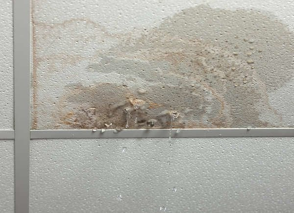 Ceiling leaks cause mold
