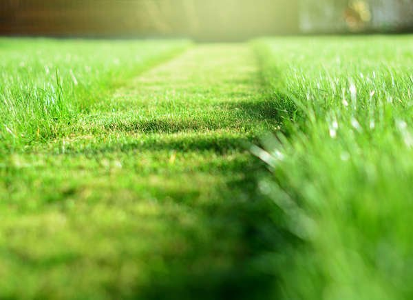 The Best Things You Can Do for Your Lawn and Garden in Under a Minute