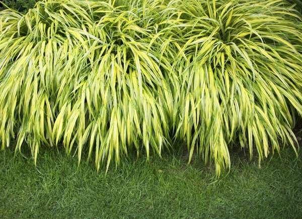 Planting Ground Cover 10 Dos And Don Ts To Heed Bob Vila Bob Vila