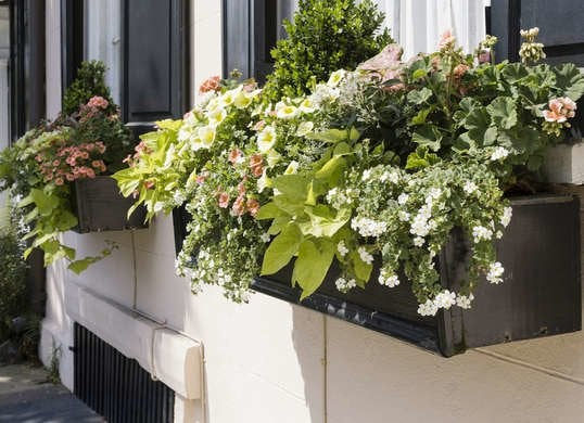 Window Box Planting