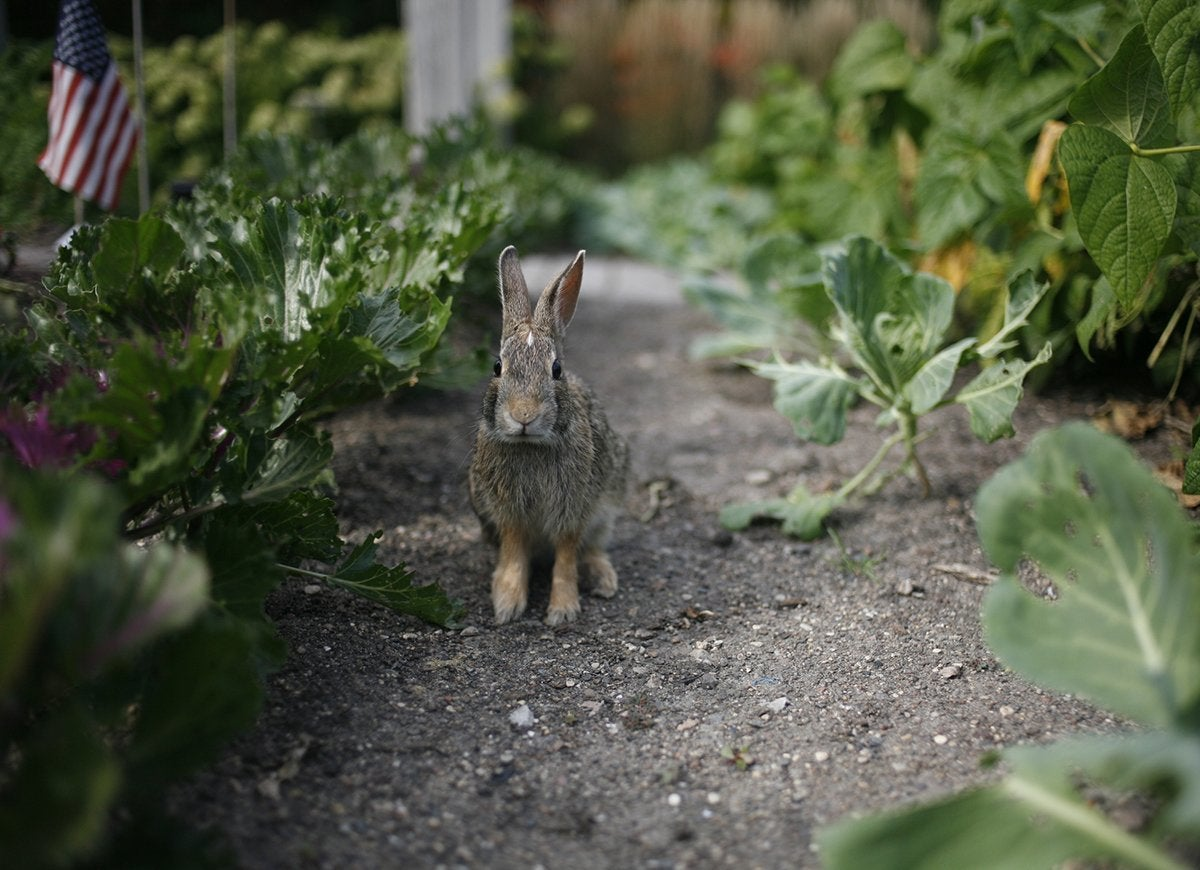 20 Tips for Keeping All Critters Out of Your Yard and Garden