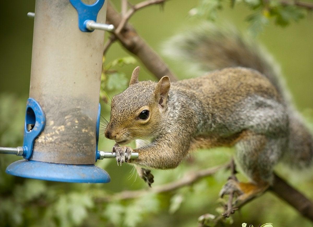 How to Get Rid of 20 Common Backyard Pests - Bob Vila