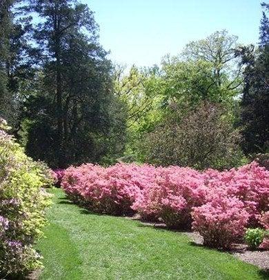 Winterthur garden azaleas gardenblogwinterthur