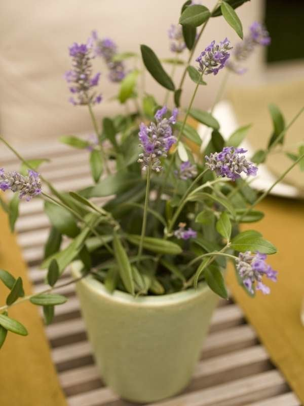 13 Plants That Repel Mosquitoes Really Bob Vila Bob Vila