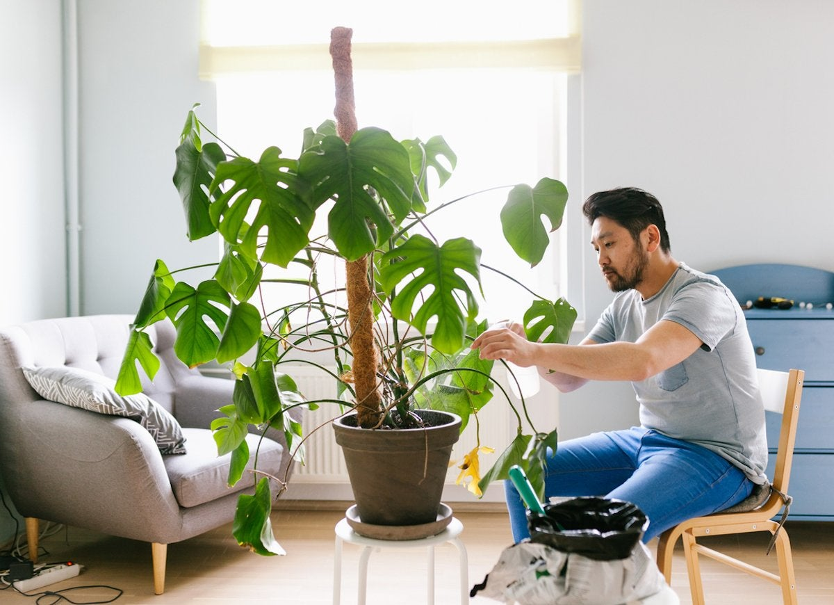 Everything You Need to Know to Become a Successful Plant Parent This Winter