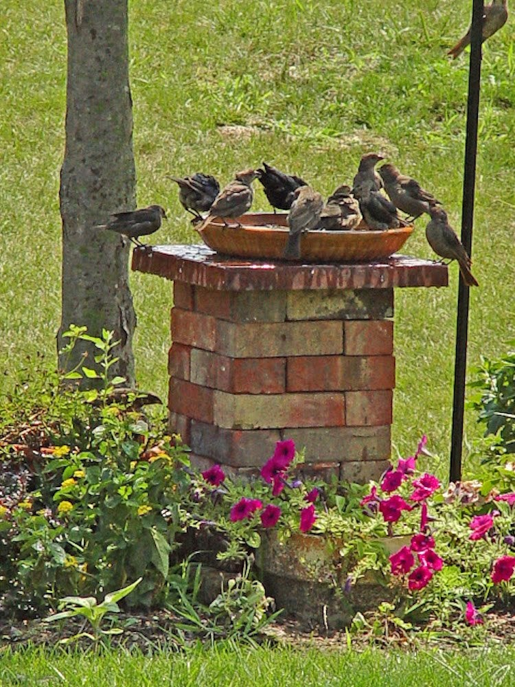 Diy Birdbath 14 Ways To Wing It Bob Vila