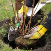 Relocate Trees and Shrubs