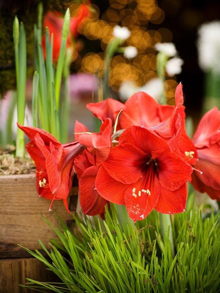 Beyond Poinsettias: The Best Winter Houseplants