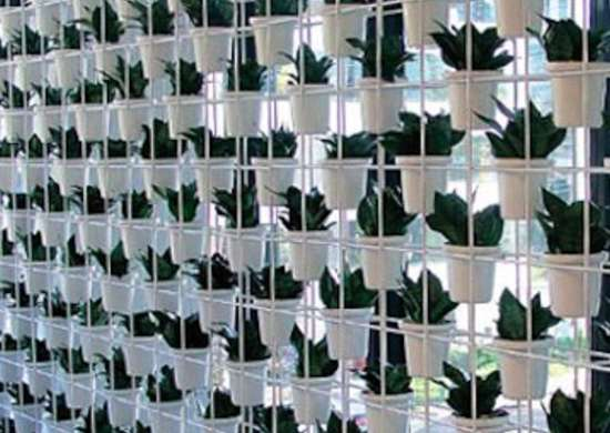 Greenwall6