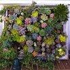 Framed Succulents