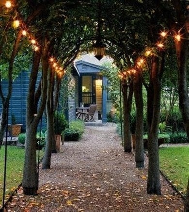Trees-with-patio-lights-mountain-lights