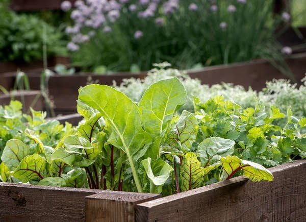 12 Fast Growing Vegetables For Your Home Garden Bob Vila
