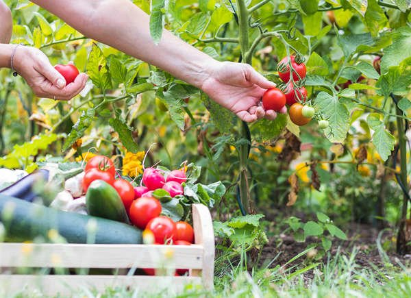 Little-Known Vegetable Gardening Tricks