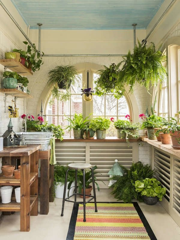 Garden Shed tanaman indoor rumah