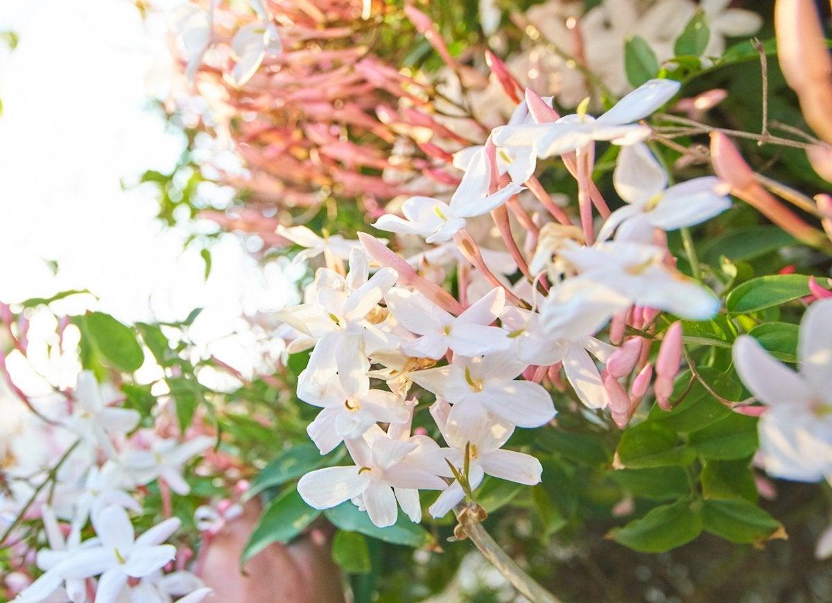 Vine Flowers 8 Cures For The Common Garden Bob Vila