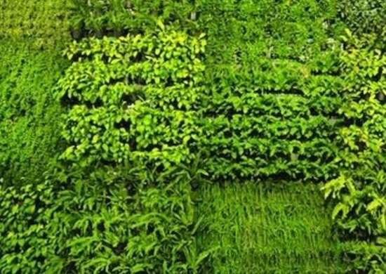 Vertical Wall Garden