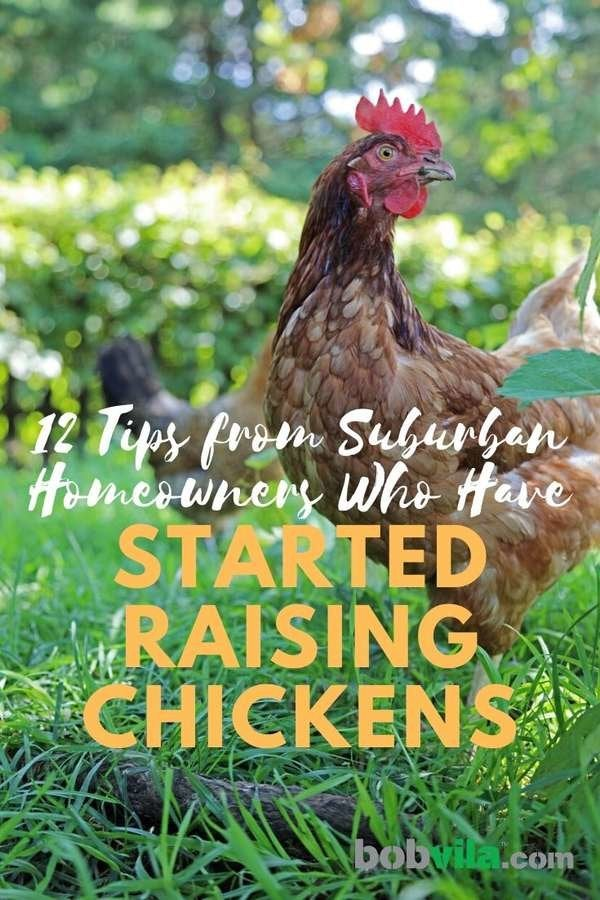 12 Tips on How to Keep Chickens - Bob Vila