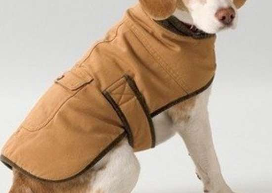 Llbean field coat bob vila pet dog gifts