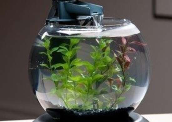 Fosterandsmith tetra acquarium bob vila pet gifts