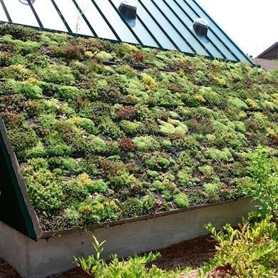 Green-roof-by-ryan-somma