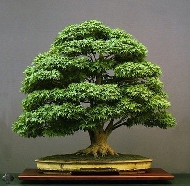 Bonsai bestgardendesign